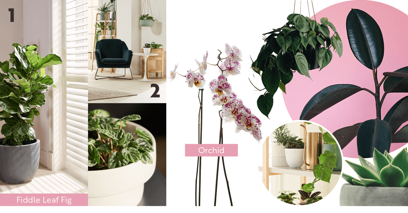 Natures Gifts | Style Stories